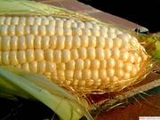 Продам посевной материал кукурузы,  подсолнечника