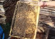 Продам мед  с личной пасики