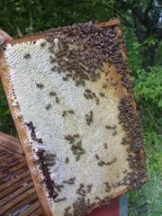 Продам мед оптом в Хмельницком